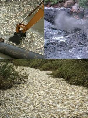 Limpeza em córrego de Salto após 'água preta' retira 40t de peixes mortos (Foto: Reprodução/TV Tem)