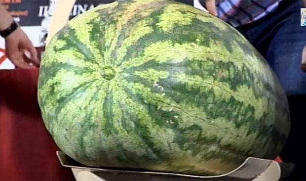 Primeiro lugar veio com uma melancia de 88,5 quilos (Foto: Reprodução/YouTube/Rtv la Serena)