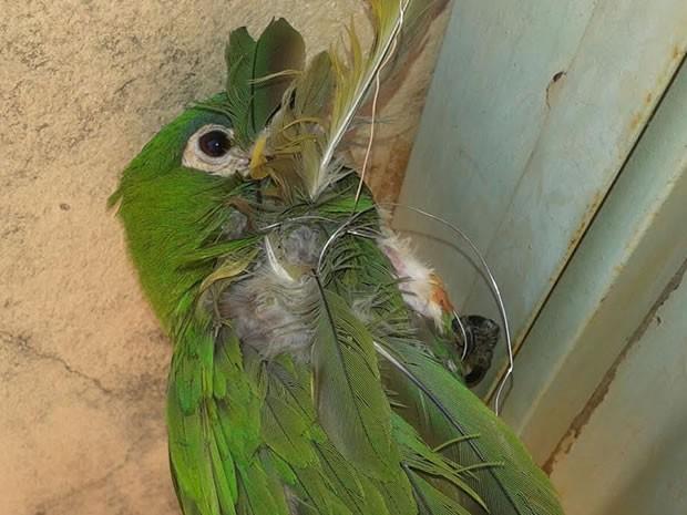 Segundo os bombeiros, ave foi solta sem ferimentos graves (Foto: Divulgação/Bombeiros Sinop (MT))