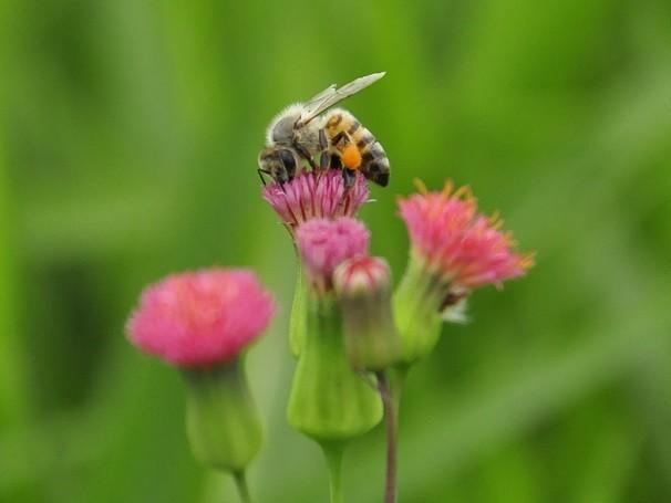 Novos estudos indicam que insetos sabem que uma chuva se aproxima ao detectarem mudança na pressão atmosférica  (Foto: Divulgação/ Lucas Conrado)