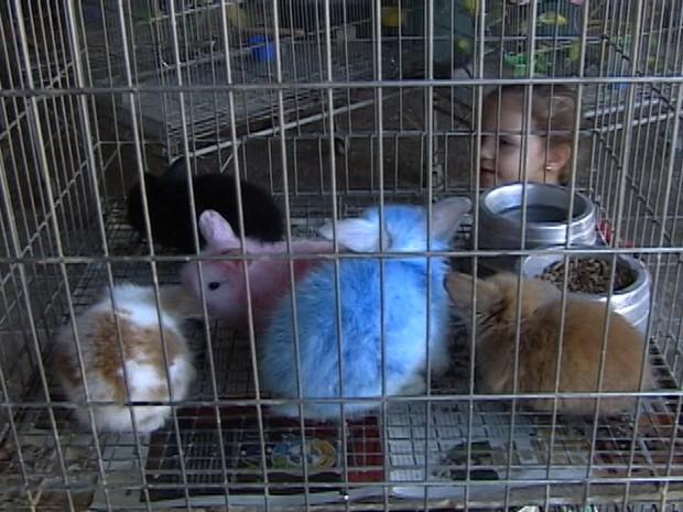 Na páscoa os coelhos ganham cores para chamar atenção  (Foto: Reprodução/TV Integração)