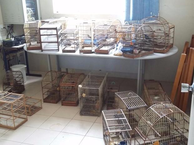 Pássaros eram criados de forma irregular em Santo Antônio da Patrulha, RS (Foto: Sd Silveira, divulgação/1º BABM)