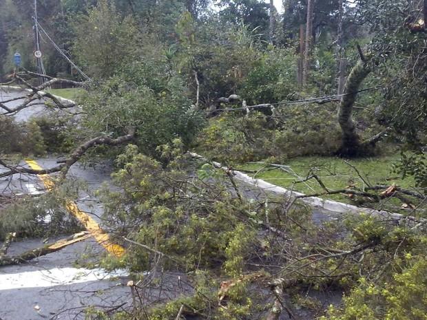 Em Curitiba, várias ruas ficaram trancadas por causa da queda de árvores  (Foto: Edi Carlos / RPC)
