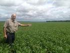 Produtores do Tocantins se preparam com otimismo para a colheita da soja