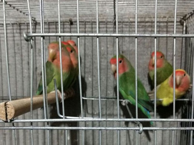 33 aves silvestres foram apreendidas em operação da PF na Grande SP (Foto: Divulgação: Receita Federal)