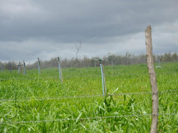 O pasto é irrigado todos os dias por 90 minutos (Foto: Flavia Pizelli/Rio Rural)