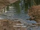 Cetesb investiga contaminação por chorume em canavial em Franca, SP