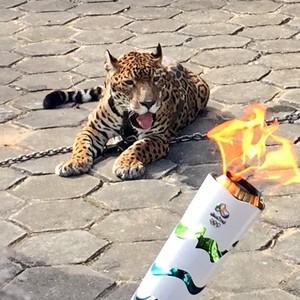 Onça Tocha chama olímpica Manaus Amazonas revezamento (Foto: Isabella Pina)