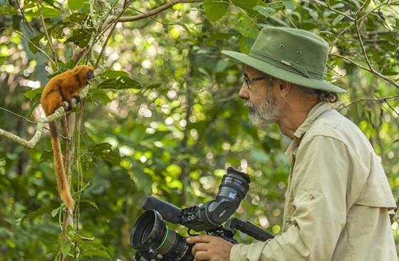 Um mico-leão-dourado parece conversar com Haroldo Palo Jr em uma reserva da Mata Atlântica  (Foto: © coleção Haroldo Palo Jr)