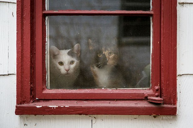 31 gatos à espera de seus donos na janela