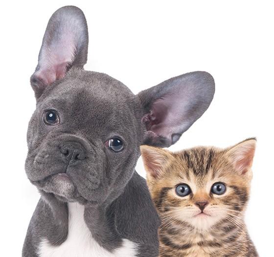 Dez diferenças interessantes entre cães e gatos (Foto: Thinkstock/Getty Images)