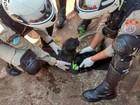 Bombeiros em MS são chamados para conter incêndio e salvam 2 cães