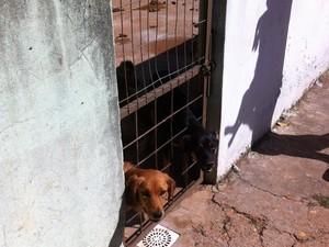 Alguns dos cães sobre os cuidados da APA (Foto: Mariely Dalmônica / Arquivo Pessoal)