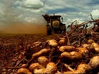 Produtores de amendoim ampliam as exportações para o mercado europeu