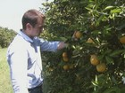 Safra de laranja melhora 1,3%, mas é a pior em 25 anos, afirma Fundecitrus