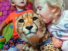 Guepardos são 'melhores amigos' de irmãos sul-africanos; veja foto