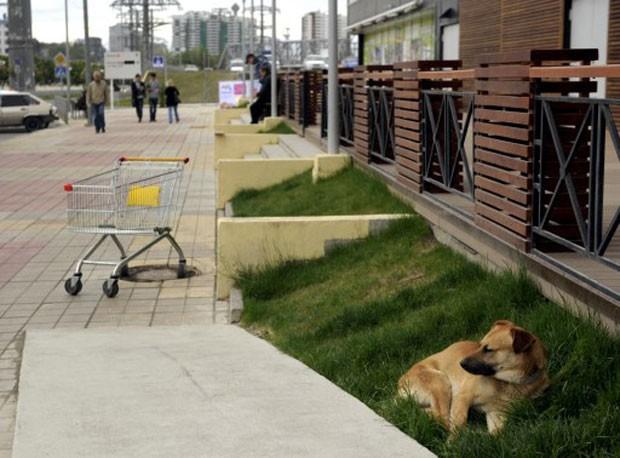 Governo pretende eliminar 2 mil cães; medida é considerada polêmica (Foto: Mikhail Mordasov/AFP)