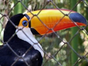 bosque jacarandá zoológico uberaba tucano (Foto: Divulgação/ Prefeitura de Uberaba)