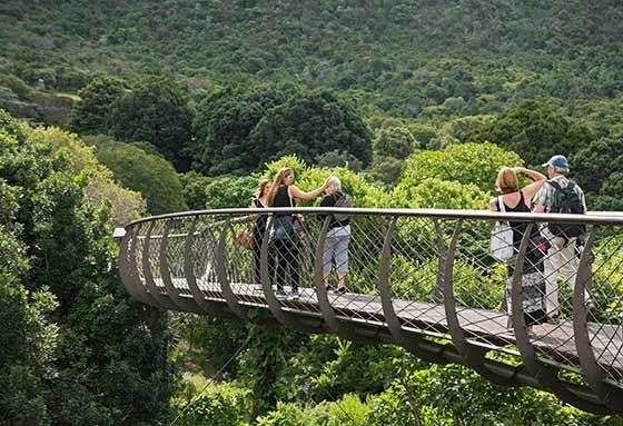 A passarela sobre as árvores do Jardim Botânico Kirstenbosch  (Foto: © Haroldo Castro/Época)