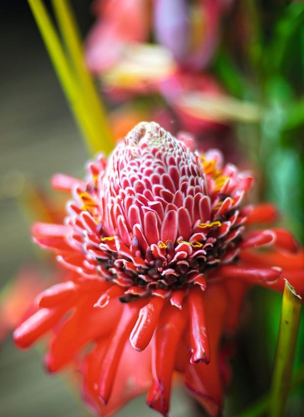 Bastão do imperador, a planta ornamental exuberante no jardim ao redor do restaurante (Foto: Rogério Voltan / Editora Globo)