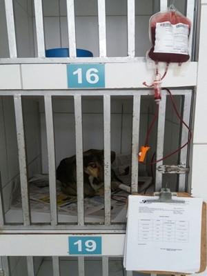 Bento está internado após transfusão de sangue (Foto: Ana Maria de Barros/Arquivo Pessoal)