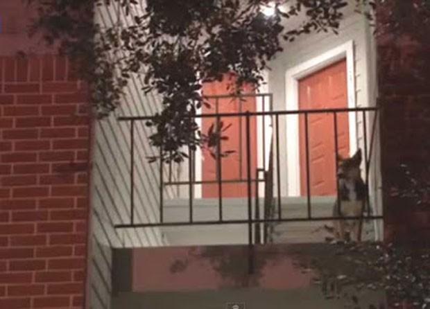 Cão esperou mais de 2 semanas por americano assassinado e comoveu vizinhos (Foto: Reprodução/YouTube/ABC News )