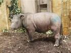 Captura de rinoceronte de Sumatra aumenta esperanças na Malásia