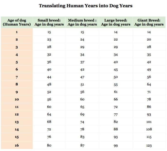 Cães pequenos, médios, grandes e gigantes possuem idades diferentes (Foto: Reprodução)