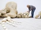 Esqueleto de baleia é exposto em museu na Alemanha