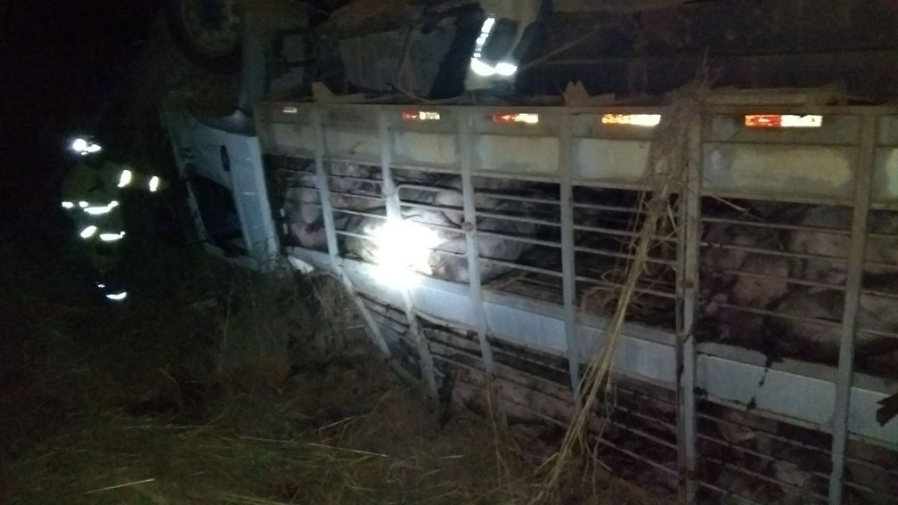 Caminhão carregado com porcos tombado na BR 251, no DF (Foto: Corpo de Bombeiros/Divulgação)