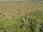 PF prende suspeitos de participar de desmatamento e grilagem no Pará
