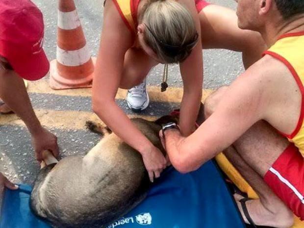 Tenete salvou cachorra que foi atropela na praia da Enseada (Foto: Cristiane Russo/Arquivo Pessoal)
