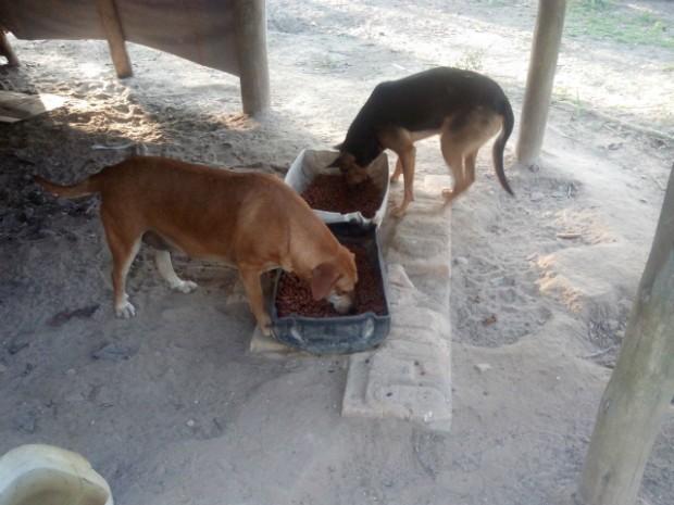 Cães abandonados recebem alimentos diariamente (Foto: Carlos Alberto Soares / TV TEM)