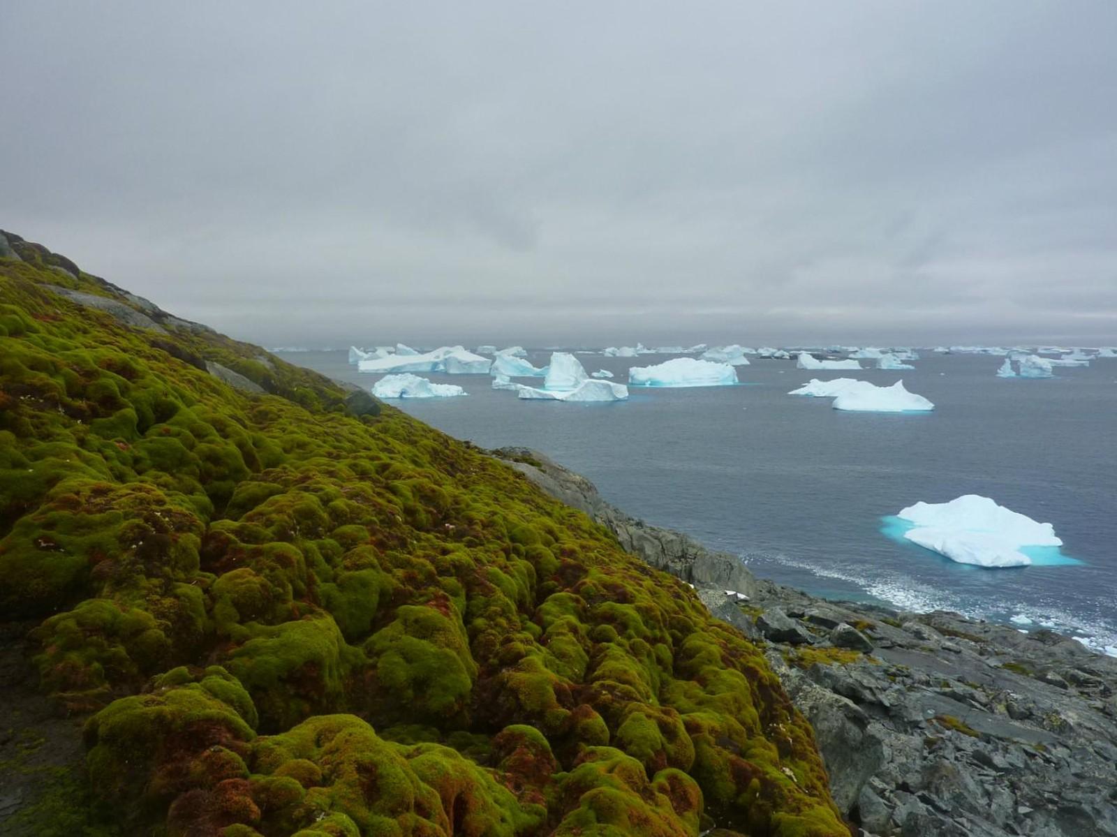 Antártica está mais verde devido ao aquecimento global, dizem cientistas