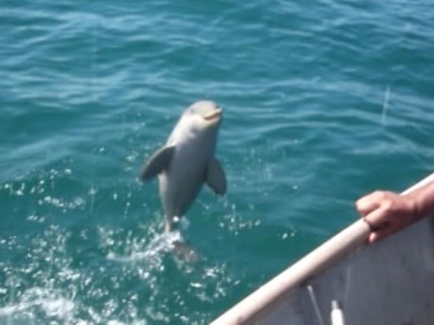 Pequeno golfinho 'agradece' a seus salvadores (Foto: Reprodução)