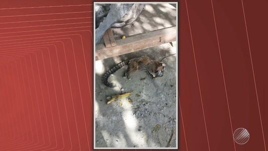 Salvador tem 4 mortes de macacos por febre amarela; vacina é reforçada