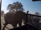 Elefante ataca veículo de safári e assusta turistas no Zimbábue