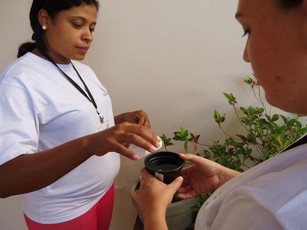 Armadilha para o mosquito da dengue em Santa Bárbara d'Oeste (Foto: Alexandr Visockas/CCZ de Santa Bárbara)
