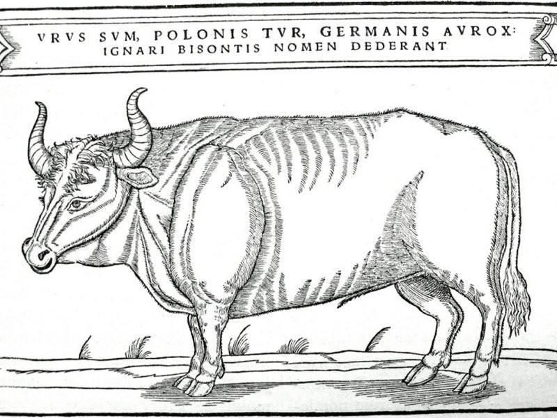 (Foto: Wikipedia/Sigismund von Herberstein)