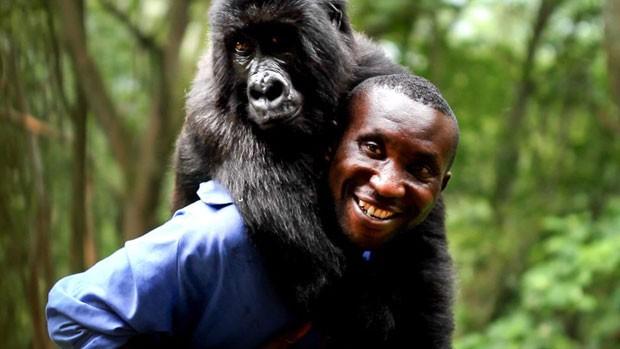 Resgate gorila1 (Foto: Virunga National Park/BBC)