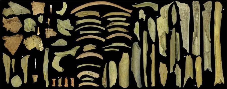 Imagem mostra ossos de pelo menos cinco indivíduos encontrados na caverna (Foto: Royal Belgian Institute of Natural Sciences)