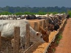 Arroba de boi gordo custa, em média, R$ 126,38 em Rondônia, diz Emater