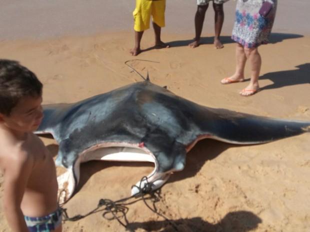 Animal foi encontrado na praia de Vila Velha (Foto: Arquivo Pessoal/ Colônia de Pescadores)