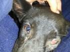 Cadela perde a visão do olho esquerdo após ter órgão perfurado