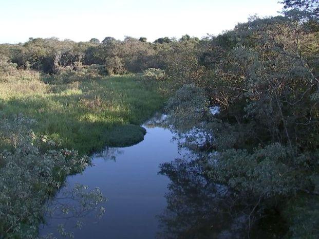 Onças vivem em reserva ambiental em Promissão (Foto: Reprodução / TV TEM)