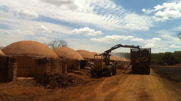 O principal insumo para a produção de biomassa será a madeira proveniente de florestas plantadas (Foto: Fabiana Vilela)