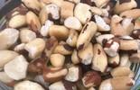 Benefícios das castanhas: veja as propriedades de cada uma delas