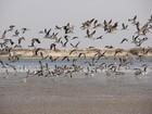Evento reúne observadores de aves no Parque da Lagoa do Peixe, no RS