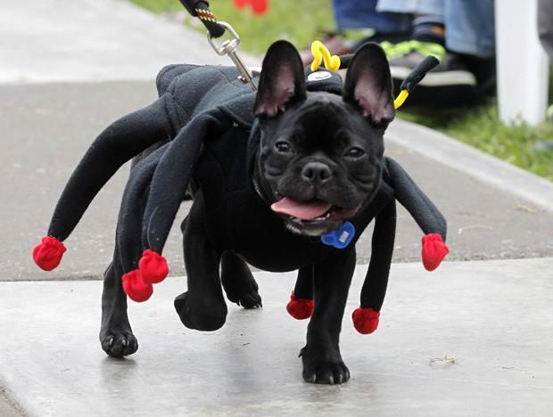 'Cachorro-aranha' participou de concurso de beleza para animais em Lima, no Peru (Foto: Mariana Bazo/Reuters)