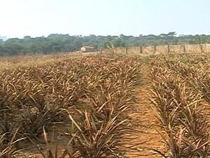Escassez Água Produtores Rurais Triângulo Mineiro (Foto: TV Integração/Reprodução)